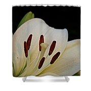 Vanilla Lily Shower Curtain