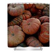 Varied Pumpkins Shower Curtain