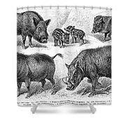 Varieties Of Swine Shower Curtain
