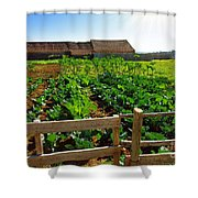 Vegetable Farm Shower Curtain by Carlos Caetano
