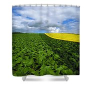 Vegetables, Cabbages Shower Curtain
