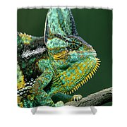 Veiled Chameleon Chamaeleo Calyptratus Shower Curtain