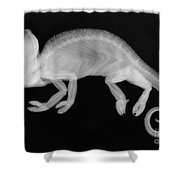 Veiled Chameleon X-ray Shower Curtain by Ted Kinsman