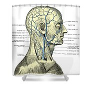 Veins Of The Head And Neck Shower Curtain