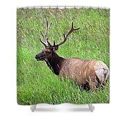 Velvet Bull Elk Shower Curtain