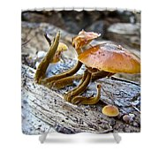 Velvet Foot Mushroom - Flammulina Velutipes Shower Curtain