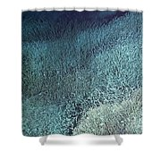 Vent Tubeworms Shower Curtain