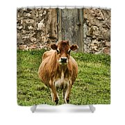 Vernon County Cow Shower Curtain