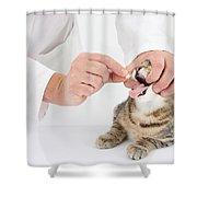 Vet And Kitten Shower Curtain