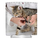 Vet Clipping Kittens Claws Shower Curtain