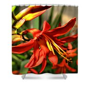 Vibrant Crocosmia Shower Curtain