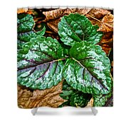 Vibrant Ground Cover  Shower Curtain