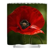Vibrant Red Oriental Poppy Wildflower Shower Curtain