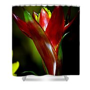 Vibrantly Rich In Red Shower Curtain
