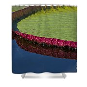 Victoria Amazonica Leaf Shower Curtain