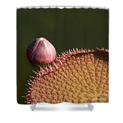 Victoria Amazonica Bud And Leaf Shower Curtain
