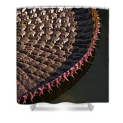 Victoria Amazonica Leaf Vertical Shower Curtain