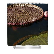 Victoria Amazonica Leaves Shower Curtain