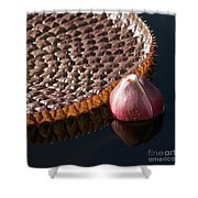 Victoria Amazonica Giant Water Lily Shower Curtain