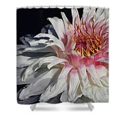 Victoria Water Lily Shower Curtain