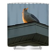 View At Dusk Shower Curtain