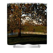 View Of A Large Sycamore Tree And White Shower Curtain