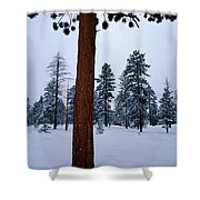 View Of A Ponderosa Pine Surrounded Shower Curtain