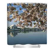 View Of Cherry Blossoms Shower Curtain