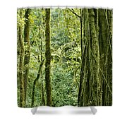 View Within A Rain Forest Shower Curtain