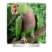 Vinaceous-breasted Parrot Amazona Shower Curtain