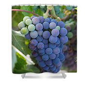 Vine Ripe Shower Curtain