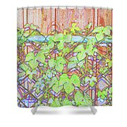 Vines On A Fence Shower Curtain