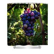 Vineyard 31 Shower Curtain