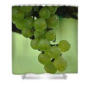 Vineyard Grapes I Shower Curtain