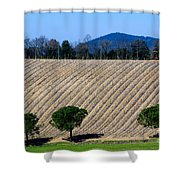 Vineyard On A Hill With Trees Shower Curtain