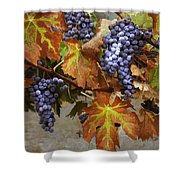 Vineyard Splendor Shower Curtain