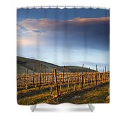 Vineyard Storm Shower Curtain by Mike  Dawson