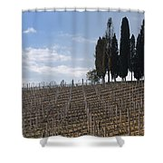 Vineyard With Cypress Trees Shower Curtain