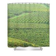Vineyards Near St Emilion In The Mist Shower Curtain