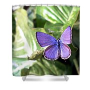 Violet Butterfly Shower Curtain