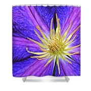 Violet Clematis Shower Curtain