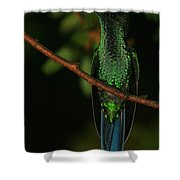 Violet-crowned Woodnymph Shower Curtain