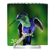 Violet-crowned Woodnymph Thalurania Shower Curtain