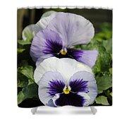 Violet Pansies Flower Shower Curtain