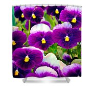 Violet Pansies Shower Curtain