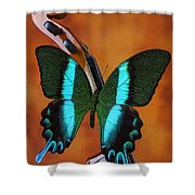 Violin With Green Black Butterfly Shower Curtain