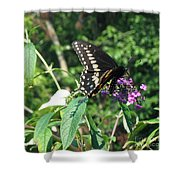 Visit From A Black Swallowtail Shower Curtain