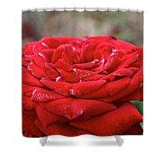 Viva Red Shower Curtain