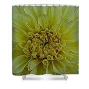 Vivid Yellow Dahlia Shower Curtain