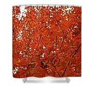Vividly Sugar Maple Shower Curtain